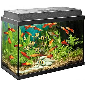 Regulace akvária a terária